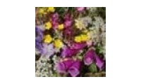 Plant-world-seeds promo codes